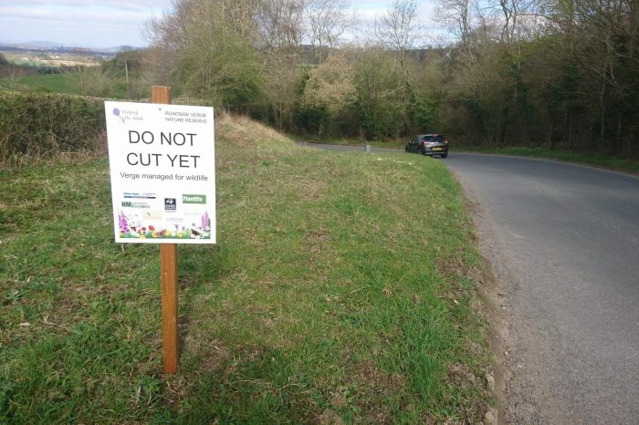 Verging on Wild: the Herefordshire road verge campaign