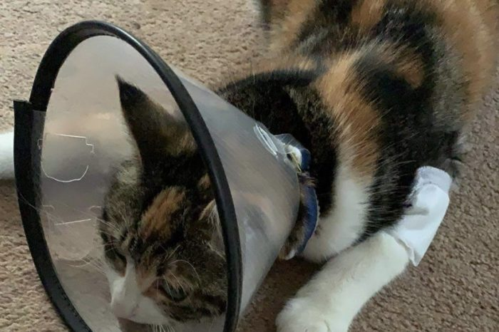 Police appeal after cat shot with air rifle